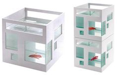 Umbra Fish Hotel, the residence of goldfish Steve Jobs and his buddy Tim Cook