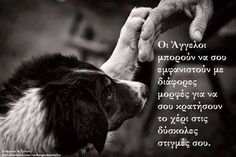 they are special people that show up in our lives when we are in a dark place to guide us back to the light Kindness To Animals, My Best Friend, Best Friends, Dark Places, Greek Quotes, Special People, True Words, Our Life, Animal Kingdom