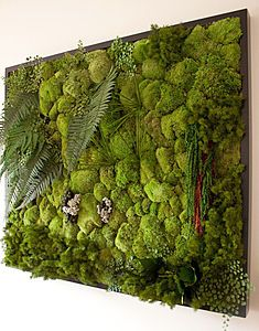Oh god, look at it with the big fern leaves. Where am I going to fit one of these into my life!!! Actually, Outside my kitchen window (the dining room window at the moment) one day I hope...