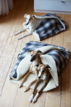 Dog Sleeping Bag by Cloud 7 Diy Dog Bed, Cool Dog Beds, Diy Pour Chien, Sleeping Dogs, Pet Beds, Diy Stuffed Animals, Dog Love, Best Dogs, Cute Dogs