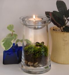 Tea Light Moss Terrarium Kit DIY by MissMossy on Etsy, $28.00  This would be great with a Magic Fairy Candle tea light in it.