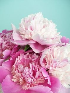 Lovely peonies via try a little tenderness