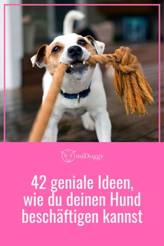 42 geniale Ideen, wie du deinen Hund beschäftigen kannst Dealing with a dog responsibly is not always easy and you often run out of ideas, which is why we have put together a lot of great tips on how Yorky, Pet Dogs, Pets, Boxer Love, Rhodesian Ridgeback, Dog Accessories, Dog Grooming, I Love Dogs, Animal Photography