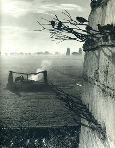 Paul Strand (1890 – 1976). S) i like the shallow depth of field that focuses on the birds and side of the building and leaves the background out of focus