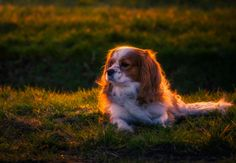 Ecky T. by Remo Scarfò            Mama mia  …! !!! ? :-(Only Windmills and Amsterdam in this gallery of Remo. That's no fun!Boring :-(Lucky me I also have a 70 - 200 and my dog wanted to pose :-)Edited with a Lightroom preset, from the NEW Ultimate Spring 2017 Pack with 25  Stunning all new Lightroom presets as a starting point for quick and easy editing with lot's of pleasure and potential addiction   :-)Let's start the fun they are just €14,- this weekend. Normal price is €27For more info…