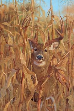 I wanted to do this piece for the longest time. Available asArtist Proof (Edition size Hunting Art, Deer Hunting, Hunting Signs, Whitetail Hunting, Hunting Humor, Hunting Stuff, Turkey Hunting, Wildlife Paintings, Wildlife Art
