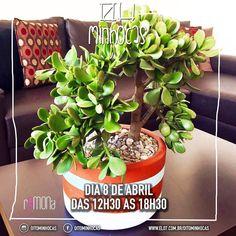 É hoje!!! Esperamos você na Av. São Luís 282 República a partir das 12h30  #oitominhocas #suculentas #cactus #plantinhas #feirinha #vemprocentro