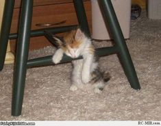Sleeping Kitten | Funny Kitten Pictures