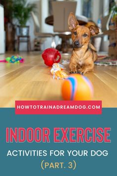 What do you do indoors to exercise the energy right out of your dog? Many times the secret to settling our dogs down is good old fashion exercise. I'm talking about walks, jogs, and romps in the yard with dog play dates. But what happens if the weather is crummy or you can't go outdoors at all? Puppy Obedience Training, Puppy Training Tips, Crate Training, Family Movie, Exercise Activities, Puppies Tips, Sick Dog, Go Outdoors, New Puppy