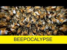 Discover Planet Earth Channel: What Would Happen If All Bees Died