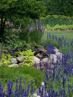 Small stone wall. Border gardens using berms and curves.