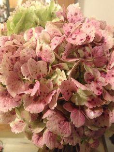 Red Antiqued hydrangea. Love.
