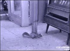 Animals Stealing Candy. [video]