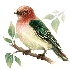 Hand Drawn Bird Illustration - (Digital illustration) for Wall Clock by *Alexandra*