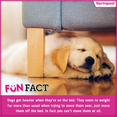 Dogs are the most amazing creatures on earth who loves you more than himself. Here is a #FunFact about dogs that you might not know..