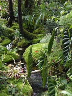 Atlanta Botanical Garden: The Tropical High Elevation House