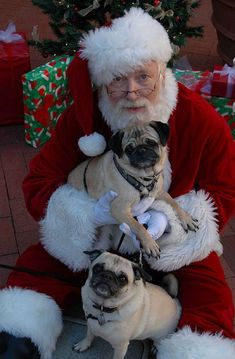 I've been very good... this is so cute! what good little puggies to sit with santa! they must be on the nice list.