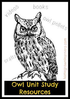 Owl Unit StudyResources
