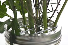 """how to make """"mason jar frog lids"""". no more scotch tape when anne brings in the handfuls of dandelions!"""