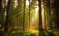 Image result for woodland wallpaper