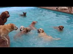 Video: ANIMALS: Dogs Love to Splash Around at Puppy Pool Party May ...