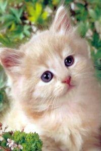 Süße Katze Handy Logo, Kostenlos Hintergrundbild auf Dein Handy