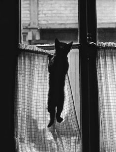 """m3zzaluna: """" untitled (paris, 1954) [original] © willy ronis, from les chats de willy ronis """""""