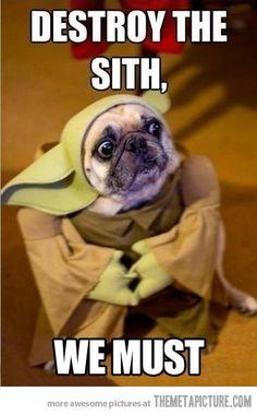 Master Yodog…