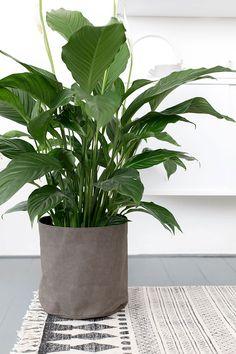 Green Living - beeldsteil.com #mooiwatplantendoen
