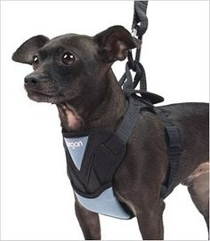 Bergan Car Harness for Dogs  Product No. 219266  Bergan designed these auto harnesses to meet V9DT B2900.1 Pet Safety Durability Test standards.