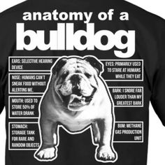 Bulldog Anatomy