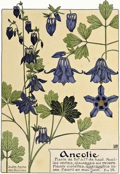 Art Nouveau flower illustration of Columbine Fleurs Art Nouveau, Motifs Art Nouveau, Design Art Nouveau, Art Nouveau Flowers, Art Nouveau Pattern, Art Illustration Vintage, Illustration Art Nouveau, Illustration Botanique, Floral Illustrations