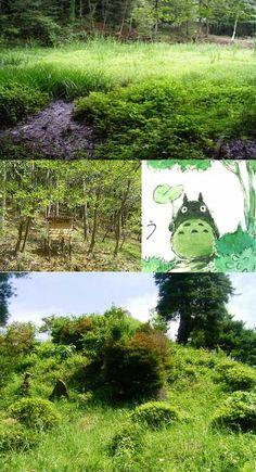 Photo de reconnaissance pour croquis + Totoro