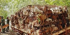 petition: Demand an End to the National Dog Meat Trade in China Now!