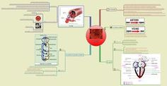 carte mentale svt terminal e&s - - Yahoo Image Search Results Don Du Sang, Mind Mapping Tools, Circulation Sanguine, Online Library, Oeuvre D'art, Image Search, Singing, Mindfulness, Teaching