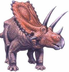 """Pentaceratops is often said to have the largest skull of any land animal (although both Torosaurus and Eotriceratops may rival it). Its name means """"five-horned face"""". This may be misleading, since two of its horns are actually epijugal bones (the spike-like projections under the eyes) which most ceratopsians had, but were particularly large in Pentaceratops"""