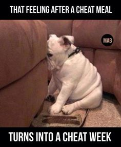 The 36 All Time Best Funny Gym Pictures With Images Guilty Dog