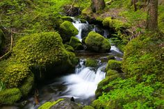 Spring Green, Mount Rainier National Park