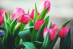 Tulipani, belli in ogni colore