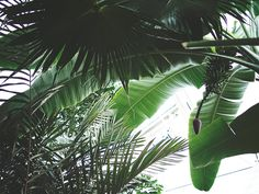 Palm tree // Palm leaf // Banana leaf //storiesbyme.se
