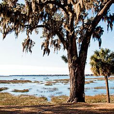 |Hunting Island State Park  Only a 16-mile drive east, Huntington Island State Park is a 5,000-acre preserve with jungle-lush foliage, an 1859 lighthouse, a long fishing pier, and four miles of pristine Atlantic beach. Located in Beaufort, South Carolina.  CoastalLiving.com