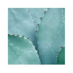 TROWBRIDGE - Succulents - in Contemporary silver (Frame Code: 624)