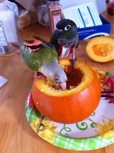pumpkins with parrots