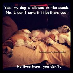My house, my dog, my rules. Do you agree? Y = Yes, my fur baby is a family member N = No