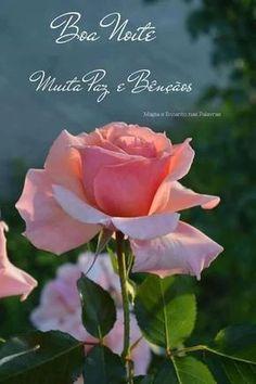 Pink rose in garden My Flower, Pretty Flowers, Flower Colors, Beautiful Roses, Beautiful Gardens, Rosa Rose, Pink Roses, Planting Flowers, Backyard
