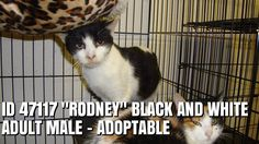 "ID 47117 ""RODNEY""  has been rescued"