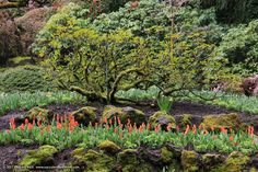 Succulents and More: Butchart Gardens on the cusp of spring