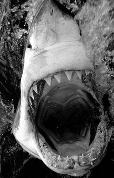 \\\ teeth \\\
