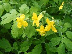 Remède naturel et efficace contre les verrues