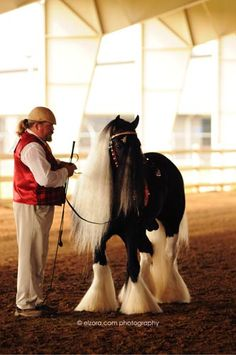 Westmoreland Gypsy Vanner Horses For Sale | Stallions, Mares and Foals